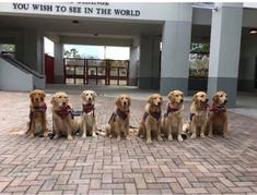 Dog Line, Dog School, Therapy Dogs, Service Dogs, Animal Rescue Shelters, Cat Memes, Funny Memes, Cat Day