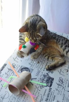 Cats Toys Ideas - Who doesnt want to spoil their favorite feline? Now you can without spending lots of cash or being super crafty with these 15 EASY diy cat toys! - Ideal toys for small cats Homemade Cat Toys, Diy Cat Toys, Dog Toys, Diy Animal Toys, Diy Jouet Pour Chat, Interactive Cat Toys, Kitten Toys, Ideal Toys, Gatos Cats