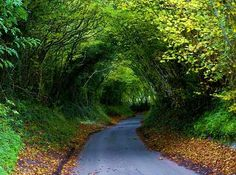 Tree Tunnels make your stomach churn with desire for exploratory activities.