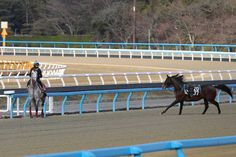 ムーア騎乗のラニ(左)に、放馬が急接近