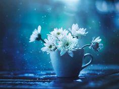 Цветы в фотографиях Ashraful Arefin