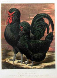 Posters by J.W. Ludlow 1873 -