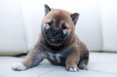 Best Puppy Formula for your Pet - puppieslove.net Dog Training Methods, Basic Dog Training, Dog Training Techniques, Training Your Puppy, Potty Training, Boy Dog Names, Pet Shop Online, Petit Basset Griffon Vendeen, Puppy Obedience Training