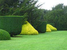 Yellow and Green Topiary