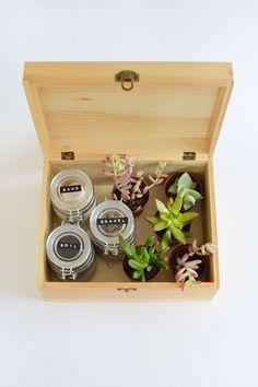 DIY | succulent gift box @burkatron