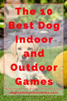 One of the best ways to relax and recharge from the hustle and bustle of daily life is to engage in games with your dog – whether outdoor or indoor. Playing outdoor or indoor games is a great way to establish social connections and challenge both your body and your mind – all in the name of pure, clean fun. You'll likely find yourself in a better state soon after, which is also something that games aim to achieve!