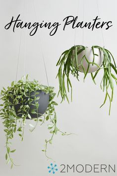 Shop Modern Planters & Hanging Planters at 2Modern. Peruse our eclectic collection of vessels for your favorite flowers and greenery.