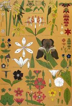 Christopher Dresser, Leaves and Flowers from Nature, no. 8, color lithograph, 1856