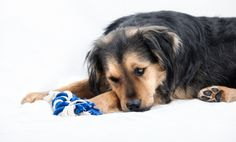 Just like us, dogs can also get an upset stomach. Some of the most common symptoms that you should watch out for include vomiting, dry heaving, diarrhea, bloati