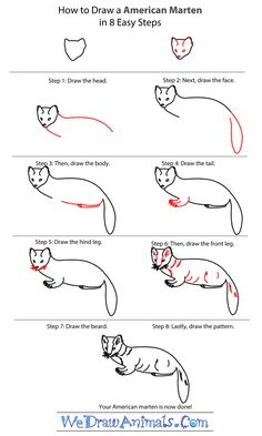 how to draw an american marten