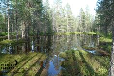 Ounasvaara, Rovaniemi. Photo by Johanna Karppinen/ Film Lapland. #filmlapland #arcticshooting #finlandlapland