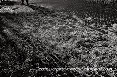 Gerrina's Creatieve Wereld: Winterfotojacht 2013-2014