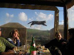 Jumping CAT  (≡•̀ꈊ•́≡)  #neko #cat