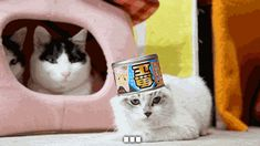 New Favorite Internet Cat