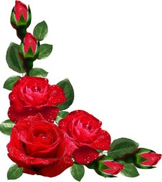 Beautiful Red Rose With Green Leaf Corner Border Design For Eid Card