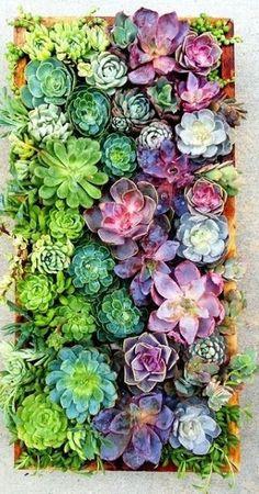 audreylovesparis:  Succulents