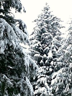 November 26, 2012: A Winter Wonderland in Juneau, Alaska today...