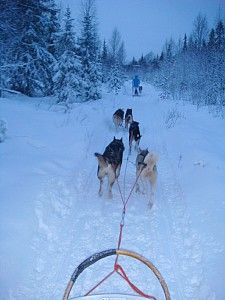 huskyride in lappland