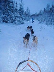 huskyride in lappland