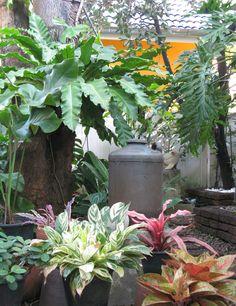 A small Tropical Garden