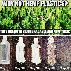 Hemp plastic is increasingly becoming a viable option as an eco-friendly alternative to carbon-based plastic. Not only is this bioplastic sourced from safe and sustainable hemp plants, but it is also typically both biodegradable and recyclable. Save Our Earth, Save The Planet, The More You Know, Good To Know, Angst Quotes, Truth Quotes, Weed Quotes, Wisdom Quotes, Faith In Humanity
