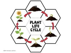 Plant life cycle-Interactive Science Notebook foldable by Satsumas and Bees Science Worksheets, Science Activities, Science Projects, Science Experiments, Science Notebooks, Interactive Notebooks, Learn English Words, Earth Science, Life Cycles