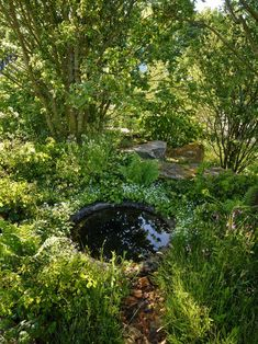 Ferns Garden, Lake Garden, Big Garden, Landscape Design, Garden Design, Dan Pearson, North Garden, Laurent Perrier, Chelsea Garden