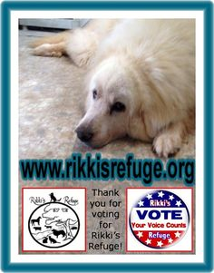 6/11/15 - Please VOTE & SHARE for RIKKI'S REFUGE in the Animal Rescue Site SHELTER CHALLENGE every day! Thank you! Vote here: http://www.shelterchallenge.com/web/charityusa/shelter-details?userId=53992&nomineeId=17448