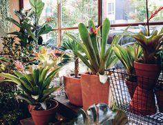 Bromeliad and succulent window