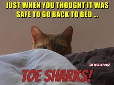 Just when you thought it was safe to go back to bed... TOE SHARKS! - What more to say other than we just LOVE cool stuff!