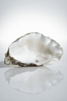 An oyster shell can look a bit rough on the outside, yet its interior resembles a smooth, elegant piece of silk. Once cleaned, you can use oyster shells for decorating, whether you harvested them . Oyster Shell Crafts, Oyster Shells, Sea Shells, Seashell Art, Seashell Crafts, Seashell Projects, Shell Ornaments, Snowman Ornaments, Sea Crafts
