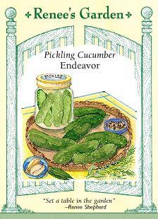 Kirby Endeavor Pickle Seeds  for summer pickling