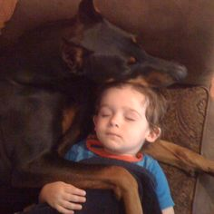 There's a reason Dobermans are called Velcro dogs. This is the safest child on the planet right now. There's no better companion, family member, or protector.