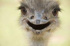 Pozitivnap - A pozitív Hírek oldala - Földünk legvidámabb teremtményei (képriport)