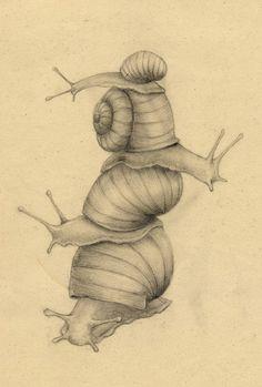snails #dailyconceptive #diarioconceptivo