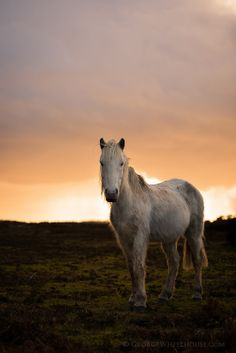 new forest pony | animals + equine photography #horses