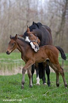 Horse loving her baby