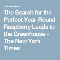 The Search for the Perfect Year-Round Raspberry Leads to the Greenhouse - The New York Times
