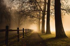-olly: Foggy Path (Source)