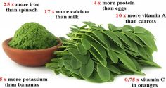 Breaking Study: This Green Herb Could be the Cure to 5 Different Types of Cancer Including Ovarian, Liver, Lung and Melanoma :http://www.healthyfoodsociety.com/breaking-study-this-green-herb-could-be-the-cure-to-5-different-types-of-cancer-including-ovarian-liver-lung-and-melanoma/