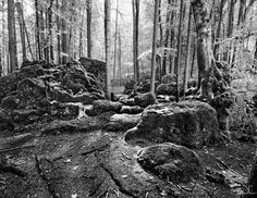 Photography Prints Black And White Nature, Forest Wall Art