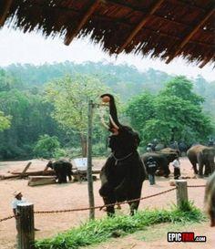 Elephant-win-basketball