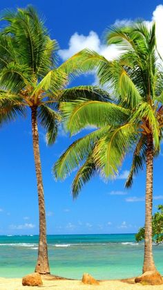 Palm Trees Most vacation feel