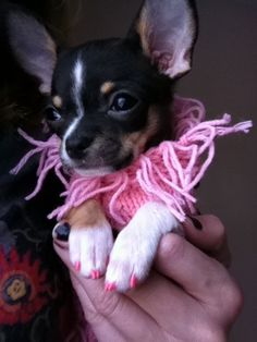 Los 50 gifs más adorables de cachorros