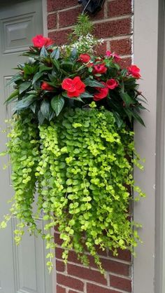Container Gardening Creeping Jenny, new guinea impatiens and diamond frost euphorbia - Container Flowers, Container Plants, Container Gardening, Outdoor Pots, Outdoor Flowers, Indoor Outdoor, Hanging Flower Baskets, Hanging Planters, Hanging Plants Outdoor