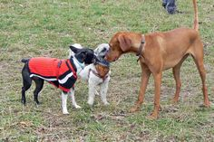Gossiping at the Dog Park