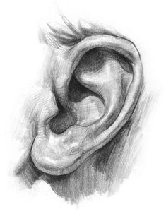 2. Now I'll focus on the complex shapes inside the ear. Make sure to consistently compare shapes to the shapes around it. Keep checking angles and the size relationships of the shapes. Breaking up the curves into segments of straights makes it easier to design and draw accurately. It's ok to exaggerate shapes if you think it will m