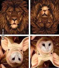 Funny pictures about Your eyes constantly deceive you. Oh, and cool pics about Your eyes constantly deceive you. Also, Your eyes constantly deceive you. Funny Animal Jokes, Cute Funny Animals, Funny Animal Pictures, Animal Memes, Stupid Funny, Haha Funny, Funny Cute, Funny Memes, Hilarious