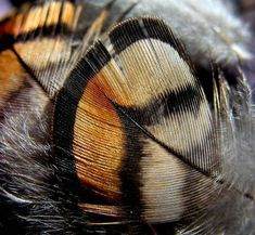 Butterfly feathers - nice colour combo