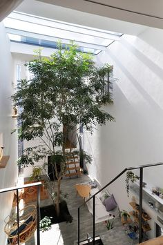 "A house with a ""square"" that feels nature indoors living with trees – Nature Beauties Interior Garden, Interior Plants, Interior And Exterior, Green Architecture, Japanese Architecture, Architecture Design, Facade Design, Indoor Trees, Vintage Stil"